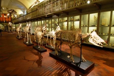 Museo di paleontologia -Firenze