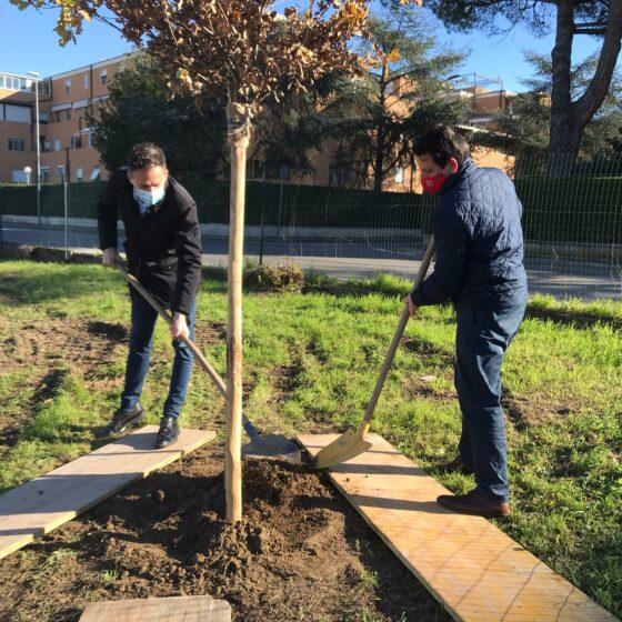 Ambiente: Firenze e Pisa piantano alberi per ogni nuovo nato