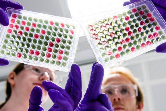 L'Italia ha bloccato 250.000 dosi di vaccino AstraZeneca dirette in Australia