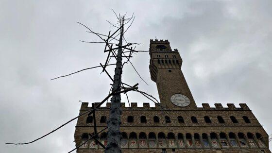 """🎧 Dantedì – In Piazza Signoria installato un albero """"Del Paradiso"""""""