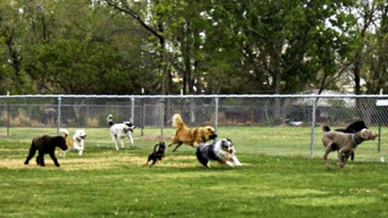 Aree cani, in arrivo nuove regole