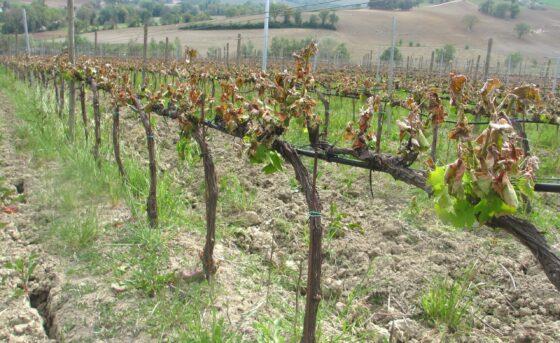 Agricoltura: la Regione apre iter segnalazioni dopo gelata