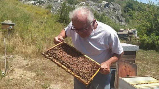 """🎧 L'apicoltore che parla con le api: """"Il mio apiario all'Elba per aiutare gli impollinatori"""""""