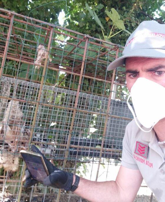Cucciolo volpe usato come esca muore in gabbia, 2 persone denunciate
