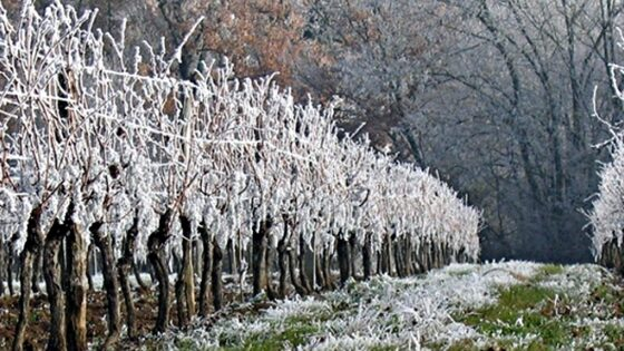🎧 Cambio climatico: -70 % di pesche, albicocche e susine in Toscana