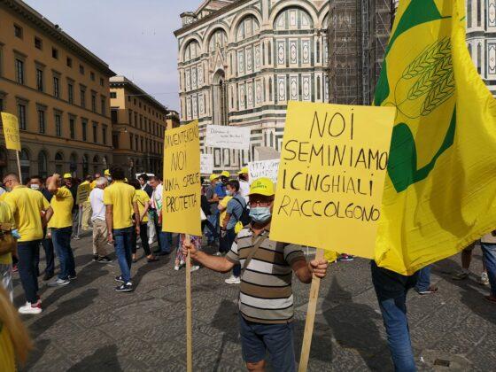 Coldiretti: cinghiali aumentati del 15% in Toscana. Serve prelievo selettivo