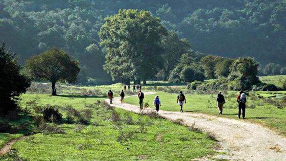🎧 Irpet: studio sugli effetti turistici la via Francigena