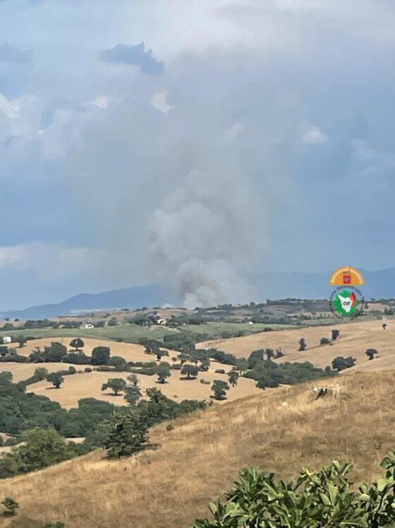 Incendio di vaste proporzioni a Campagnatico (Gr), mezzi aerei in azione