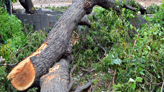Incidente sul lavoro, uomo muore schiacciato da albero