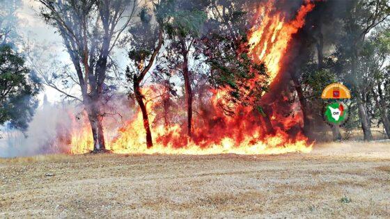 Incendio a Cecina, in fiamme oliveti, boschi e terreni incolti