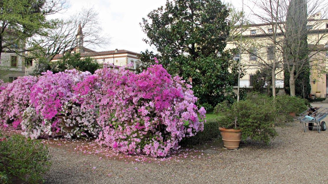 Riaperto l orto botanico di firenze for Giardino orto botanico firenze