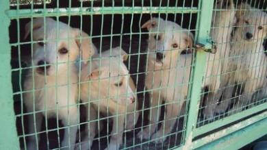 PONTEDERA, SOTTO PROCESSO I PROPRIETARI DI UN NEGOZIO DI ANIMALI