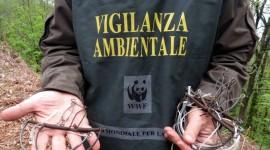 """WWF, DOSSIER SU BRACCONAGGIO """"FURTO DI NATURA MADE IN ITALY"""""""