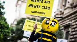 """GREENPEACE: STOP AI NEONICOTINOIDI IN UE, """"SCIOPERO"""" DELLE API"""